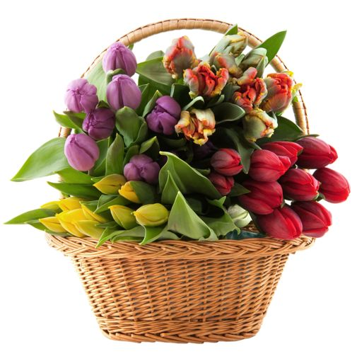 Beautiful clipart flower bucket On images PNG best Clipart
