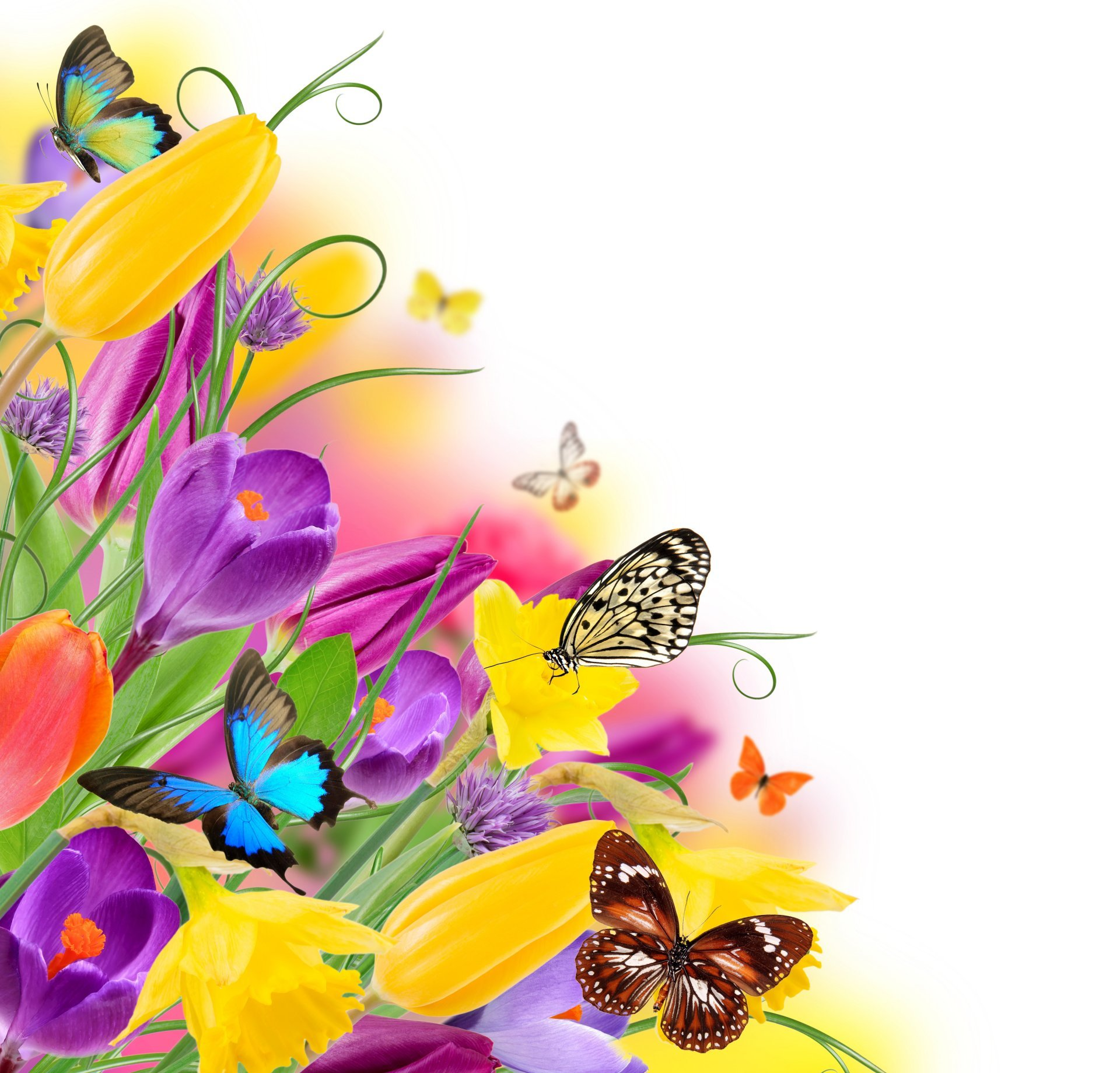 Beautiful clipart flower butterfly  tulips spring butterfly spring
