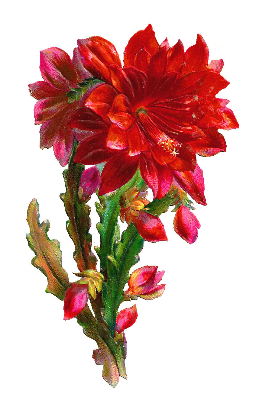 Beautiful clipart one  Flower Flower Images: Red