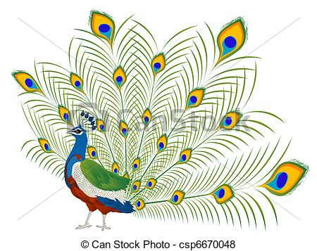 Beautiful clipart peacock Illustration of and  white
