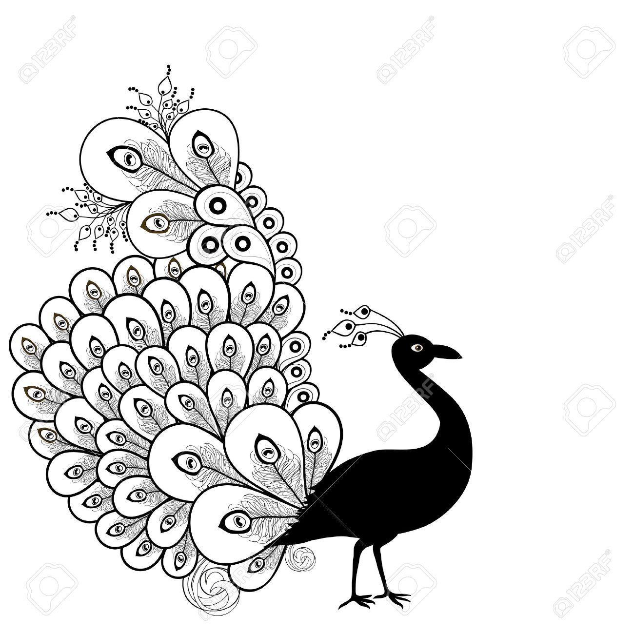 Peacock clipart black and white Peacock white 839 and Peacock