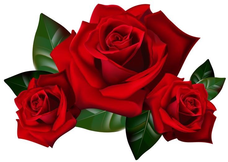 Beautiful clipart red rose Red Clipart stylized Clipart rose:
