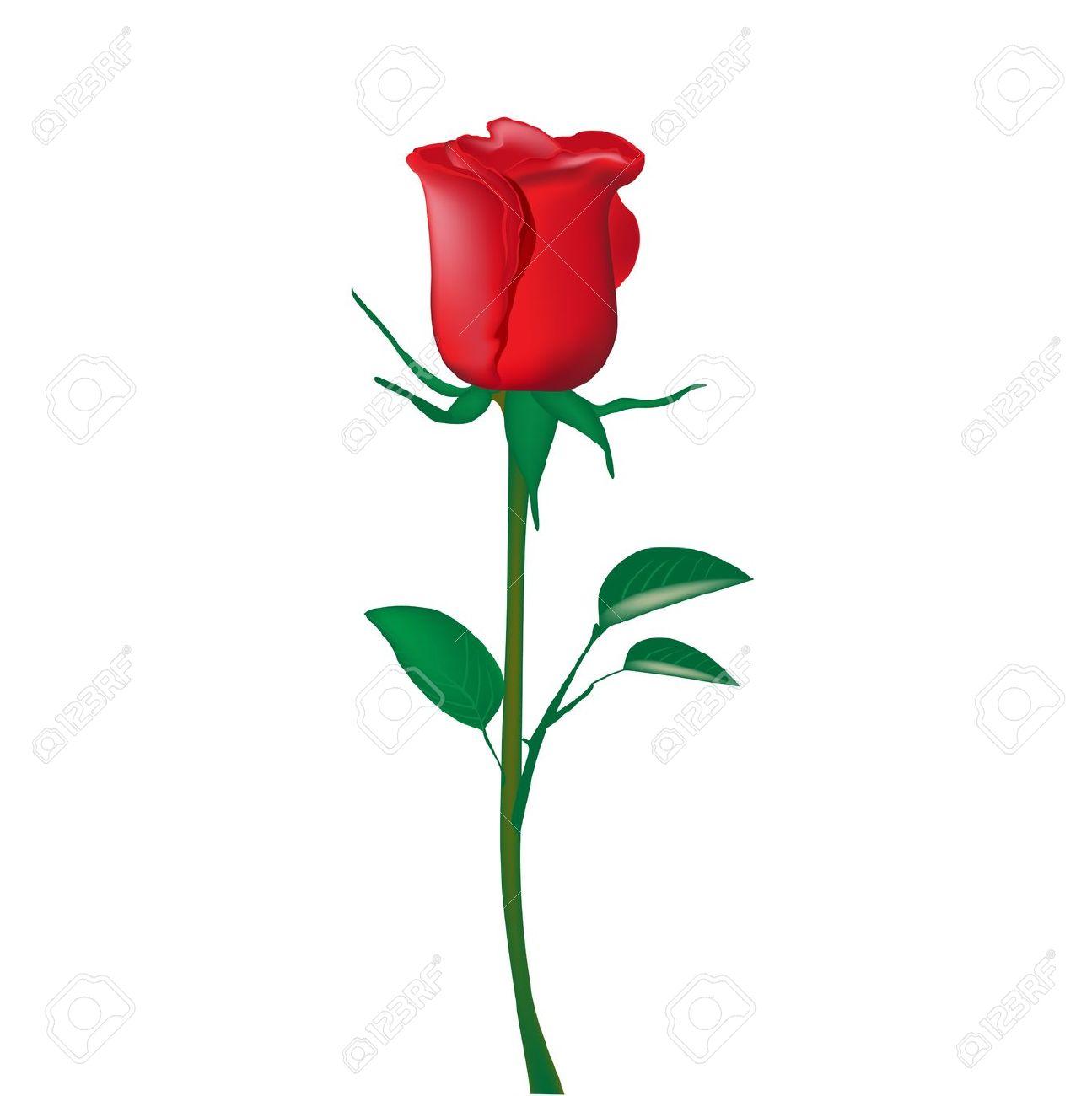 Beautiful clipart red rose Clipart single rose  Beautiful