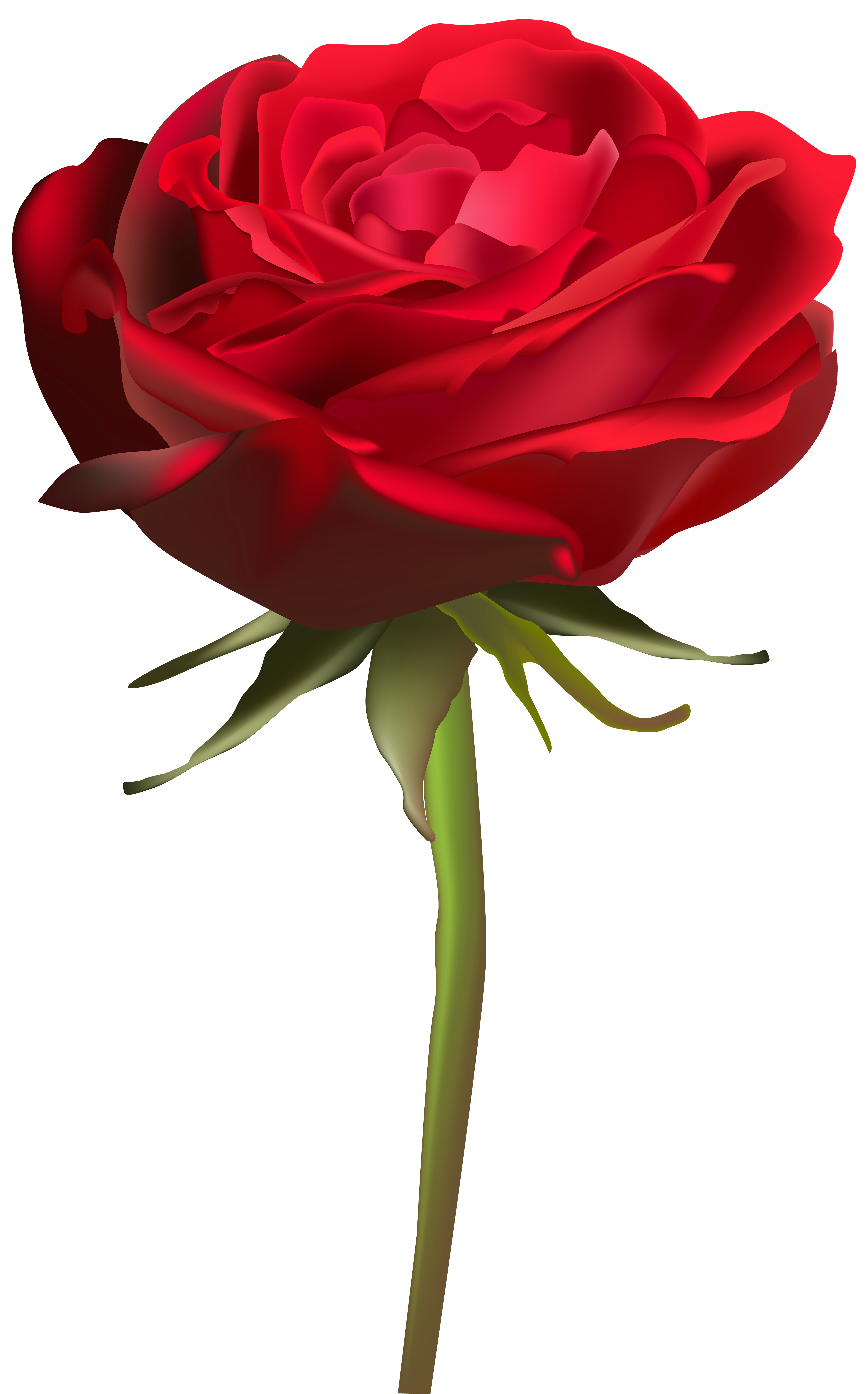 Beautiful clipart red rose Art  Rose Yopriceville size