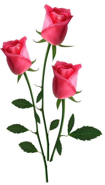 Beautiful clipart rose plant Beautiful Pink PNG Clipart Picture