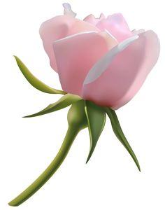 Beautiful clipart rose plant Beautiful Pinterest Rose PNG Clip