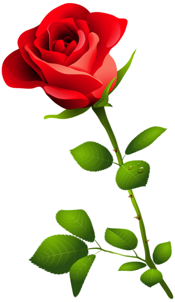 Beautiful clipart rose plant Transparent Red PNG Picture Image