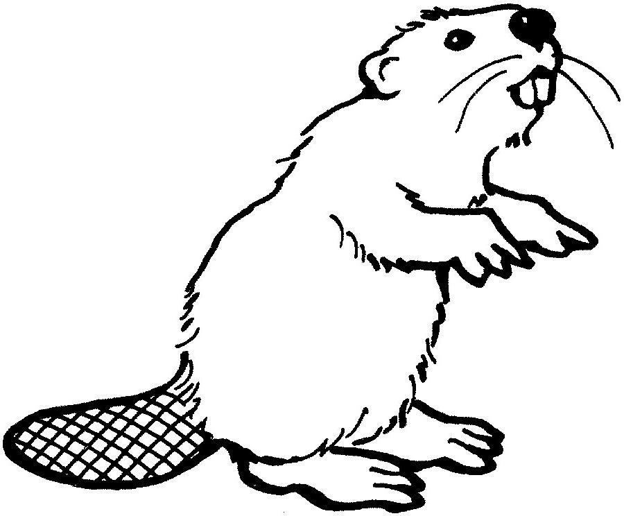 Beaver clipart outline Beaver clipart Beaver clipart Art