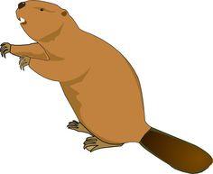 Beaver clipart fishing Beaver habitat élővilág/Water  Cliparts