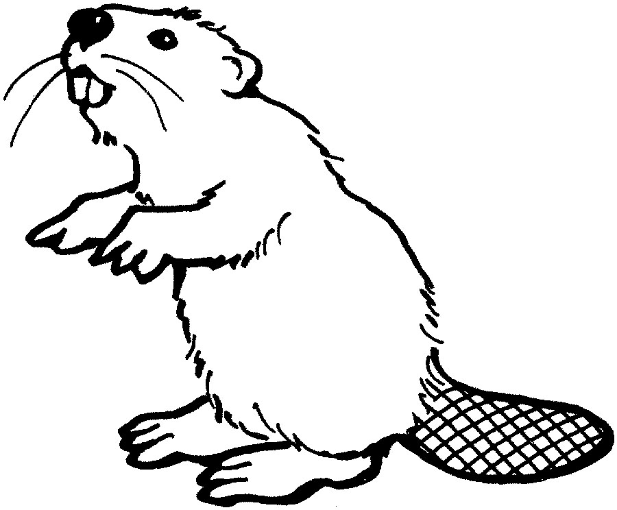 Beaver clipart outline Beaver Drawing drawing Beaver photo#17