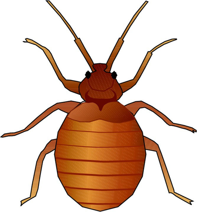 Beatle clipart animated Collection bug  Animated Cute