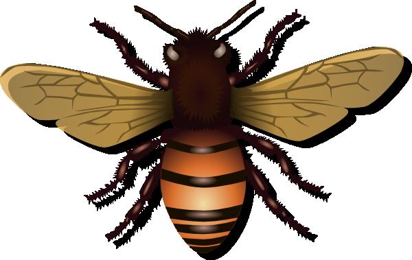 Bees clipart invertebrate Download Clip royalty Art com
