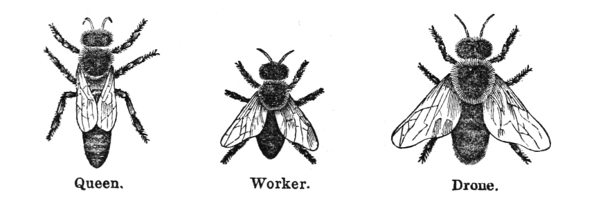 Bees clipart vintage Art Bee The 14 Page