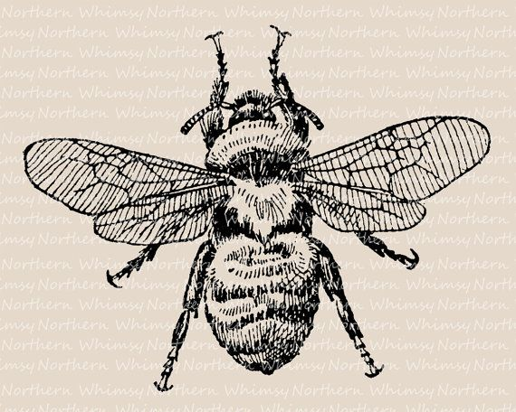 Bees clipart vintage Bee images Clip Illustration Insect