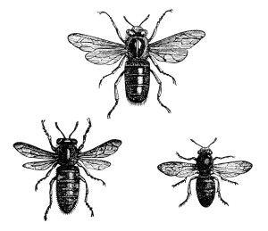Bees clipart vintage Bees Vintage clip illustration printable