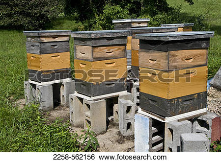 Bee Hive clipart box Hive Boxed Stock clipart Honey