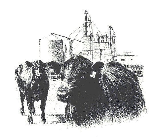 Beef clipart angus cow 89 best images Pinterest Cattle