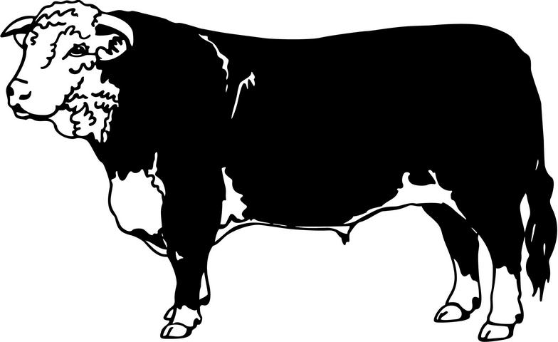 Beef clipart angus cow  Cow pictures Cow bull