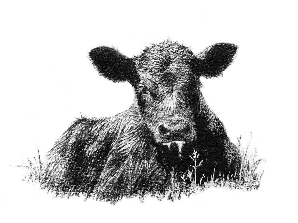 Bull clipart friendly Clip Calf Angus Art