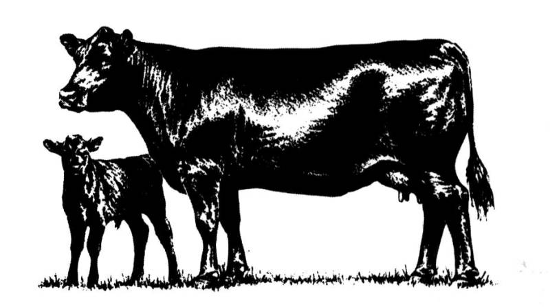 Beef clipart black angus bull Cut in always steaks Angus