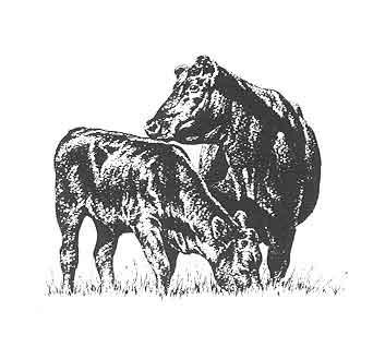 Beef clipart black angus bull Black angus Metal Angus Black