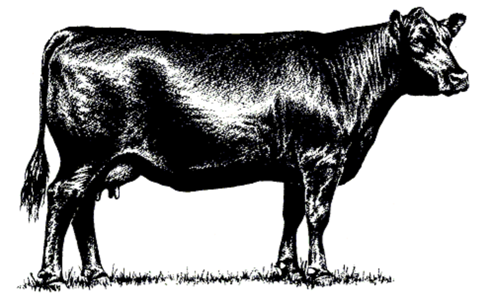 "Beef clipart black angus bull Auction Sullivan Bred ""Bob Annual"