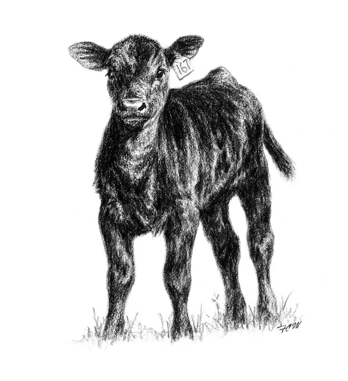 Drawn cattle baby calf #9