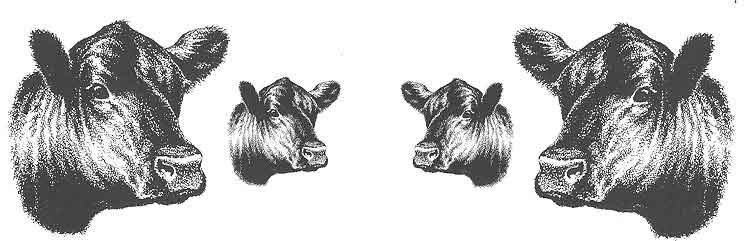 Drawn bull comic Angus Art Cow Clip Heads