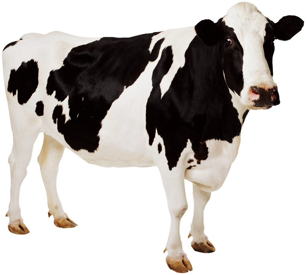 Beef clipart dairy cow Clipart Dairy Drawing China Free