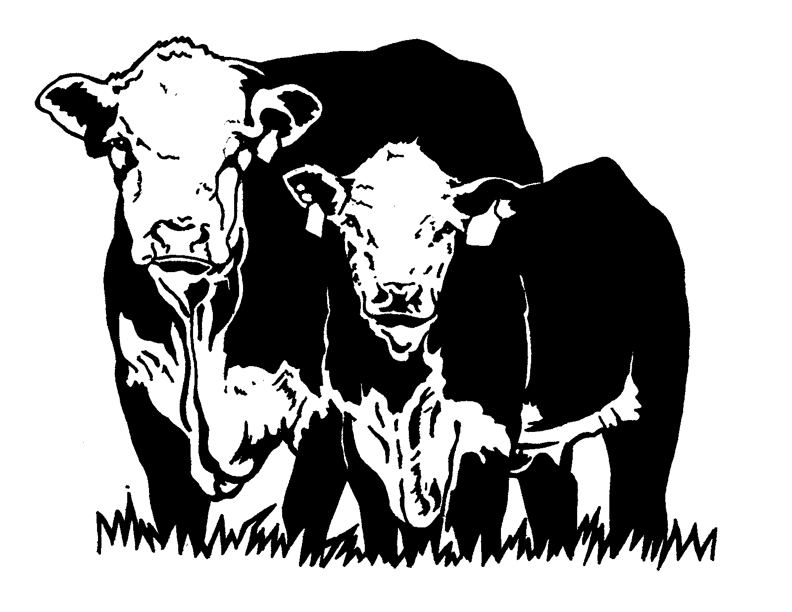Beef clipart hereford cow Art Hereford Art American Library