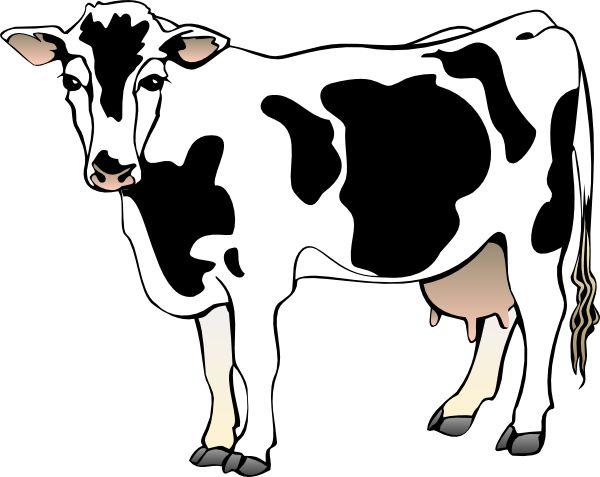 Beef clipart jersey cow Clip art Pinterest 663 11