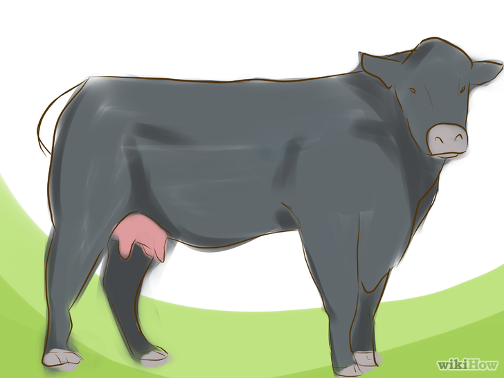 Beef clipart jersey cow Black (with Identify Angus Angus