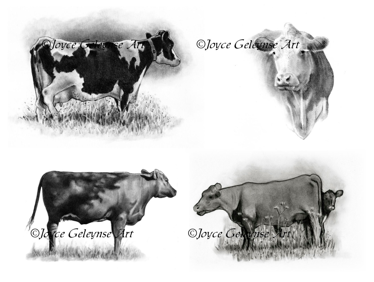 Beef clipart jersey cow Clipart Pencil Hand cow Realism