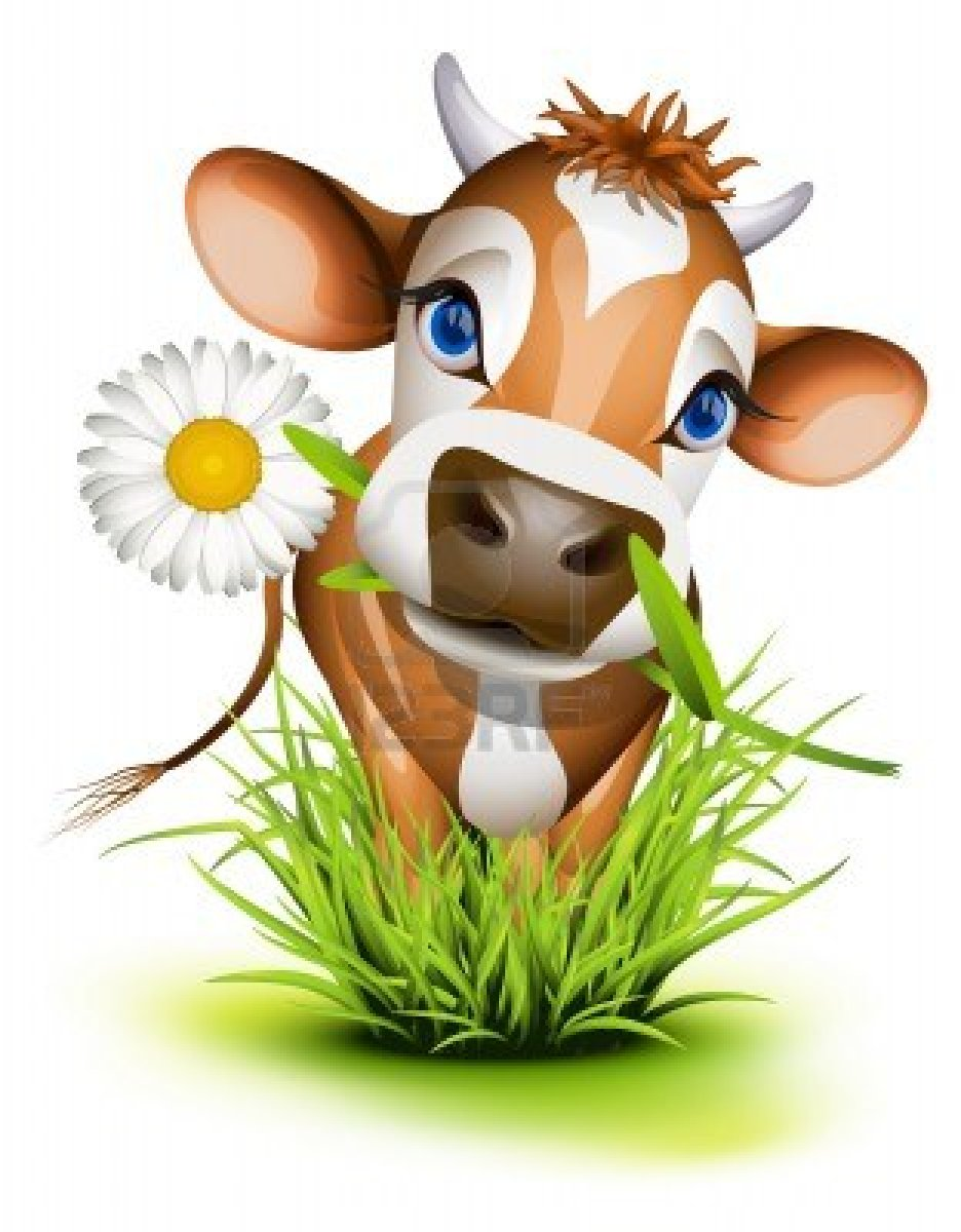 Beef clipart jersey cow Green  grass grass Photo