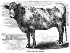 Beef clipart vintage And black ~ free engraving