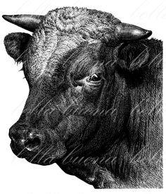 Beef clipart vintage Cow Antique Goat Animal Artist