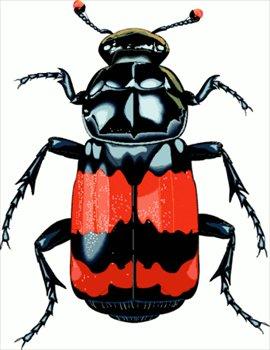 Beelte clipart bettle Beetle%20clipart 20clipart Free Clipart Panda