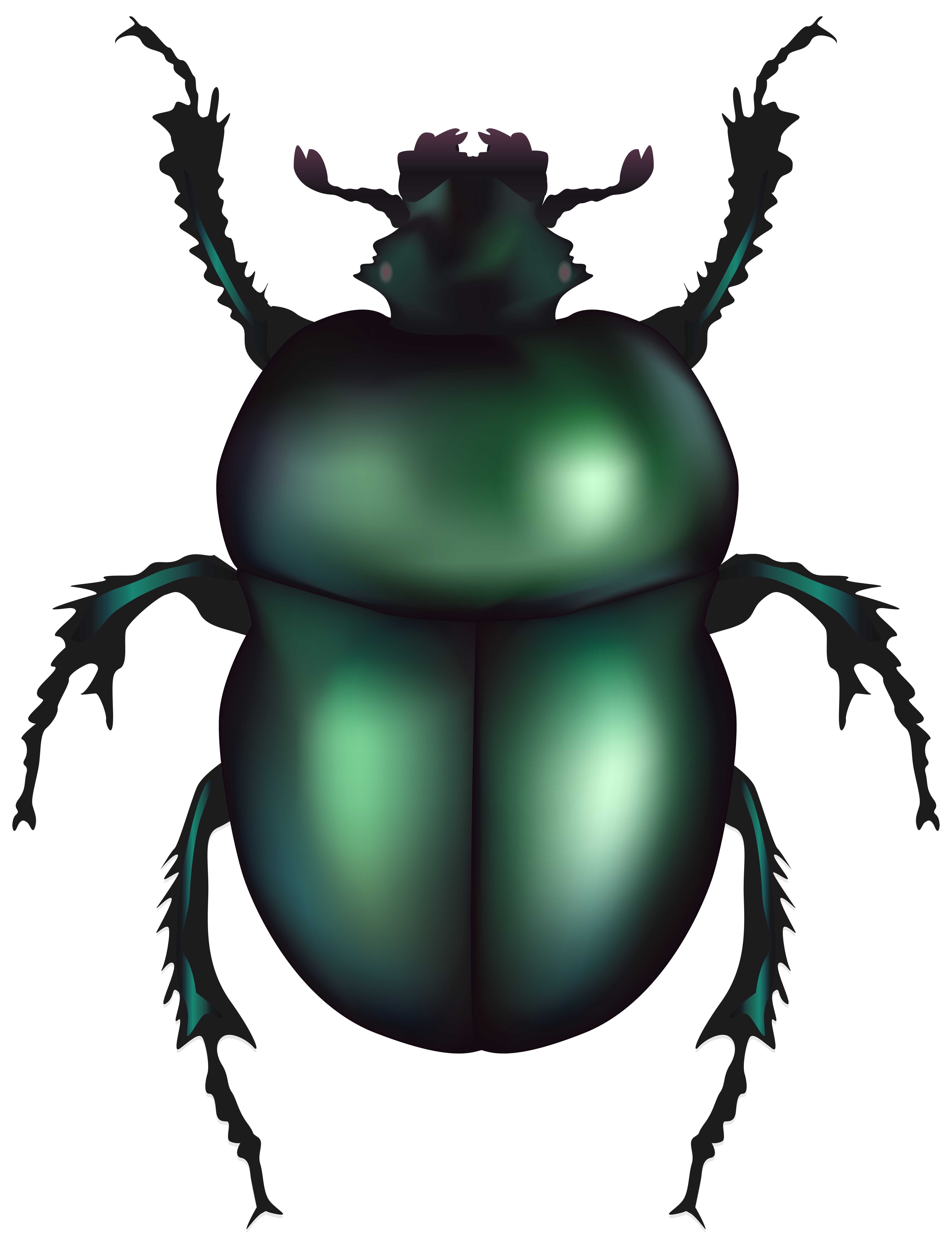 Beelte clipart green Clipart clipart drawings Download Beetle