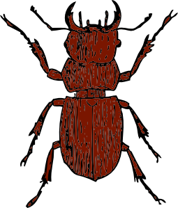 Beetle clipart bettle High Art Stag Clip Quality