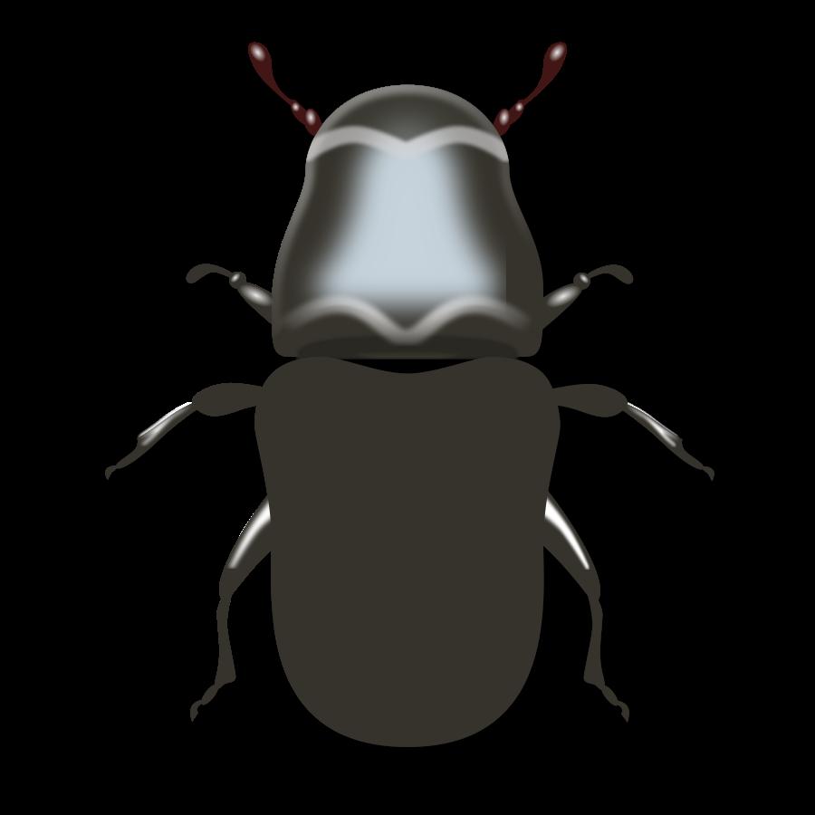 Beetle clipart bettle Free Clipart beetle%20clipart%20 Images Clipart