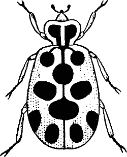 Monochrome clipart insect #9