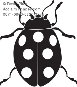 Bugs clipart spotted Spotted Illustration Spotted a Beetle