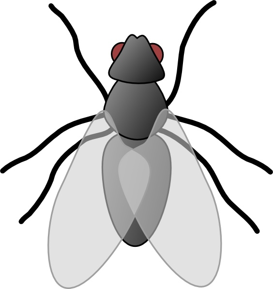Drawn flying flying insect #12