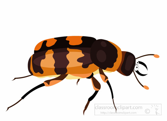 Bugs clipart beetle Insect graphics pictures beetle for