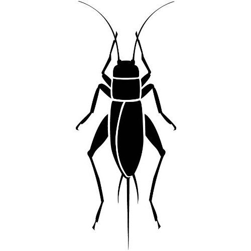 Bug clipart cricket Insect Pinterest Black Cricket ideas