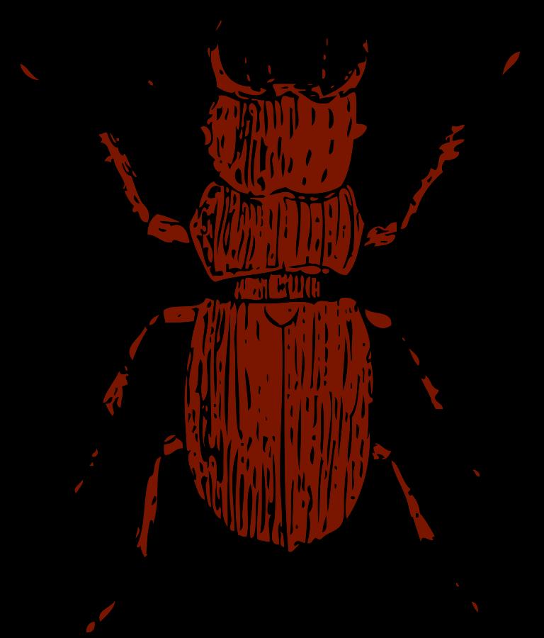Beelte clipart bettle Beetle%20clipart%20 Clipart Free Clipart Panda