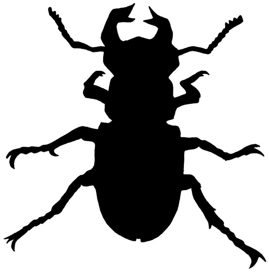 Beatle clipart silhouette Beetle DeviantArt Beetle Zucco1 by