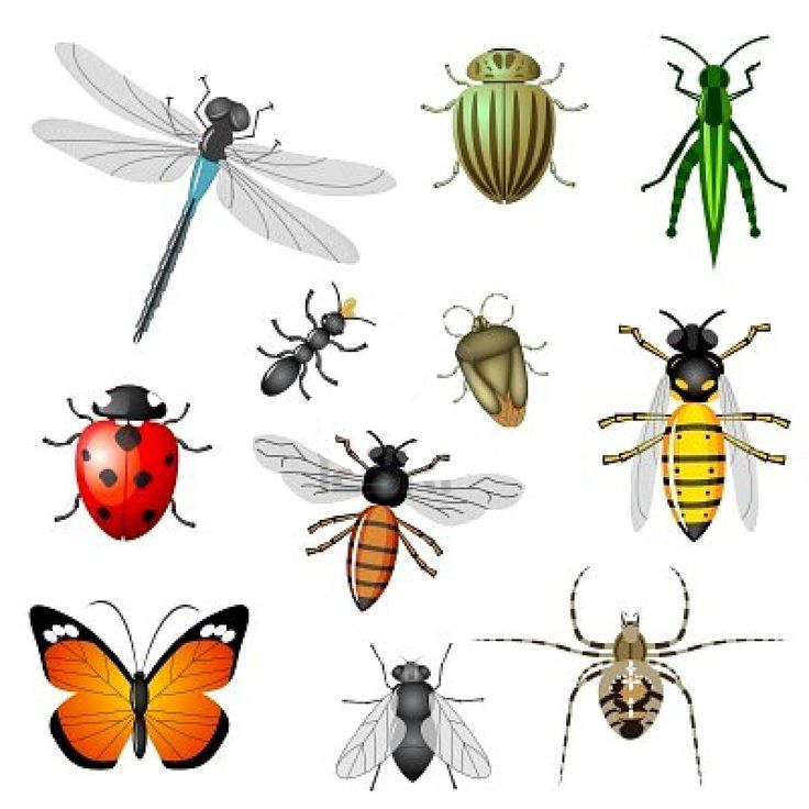Bugs clipart garden insect Insects are Best and a