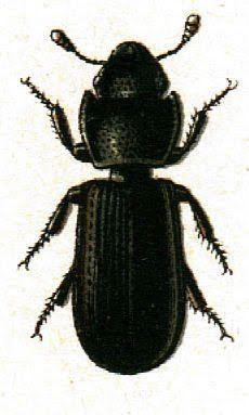 Beetles clipart lady beetle Art Clip Fairy Bugs Orange