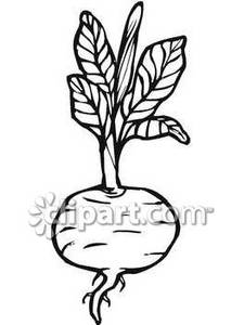 Beet clipart Free and and Clipart Beet